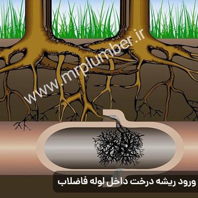 گرفتگی لوله فاضلاب با ریشه های درخت